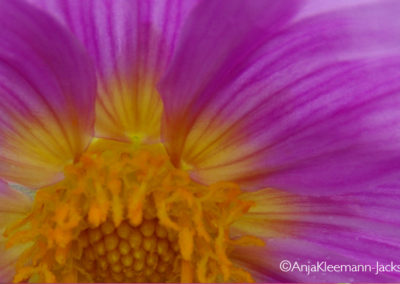 A.Kleemann-Jacks-Flower02